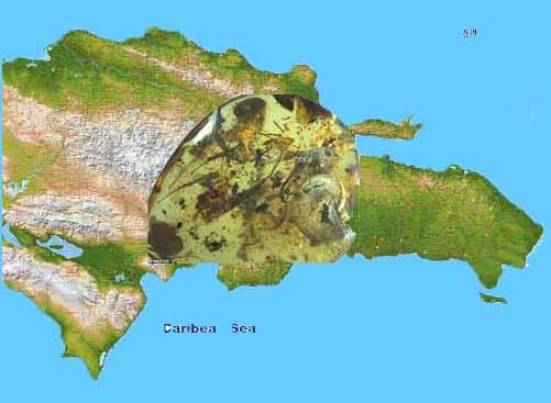 EN RPUBLICA DOMINICANA  DESCUBREN  PIEZA DE AMBAR QUE TINE MAS DE 20 MILLONES DE AÑOS SEGÚN PUBLICACION DEL DIARIO DAILY NEWS DE NUEVA YORK.
